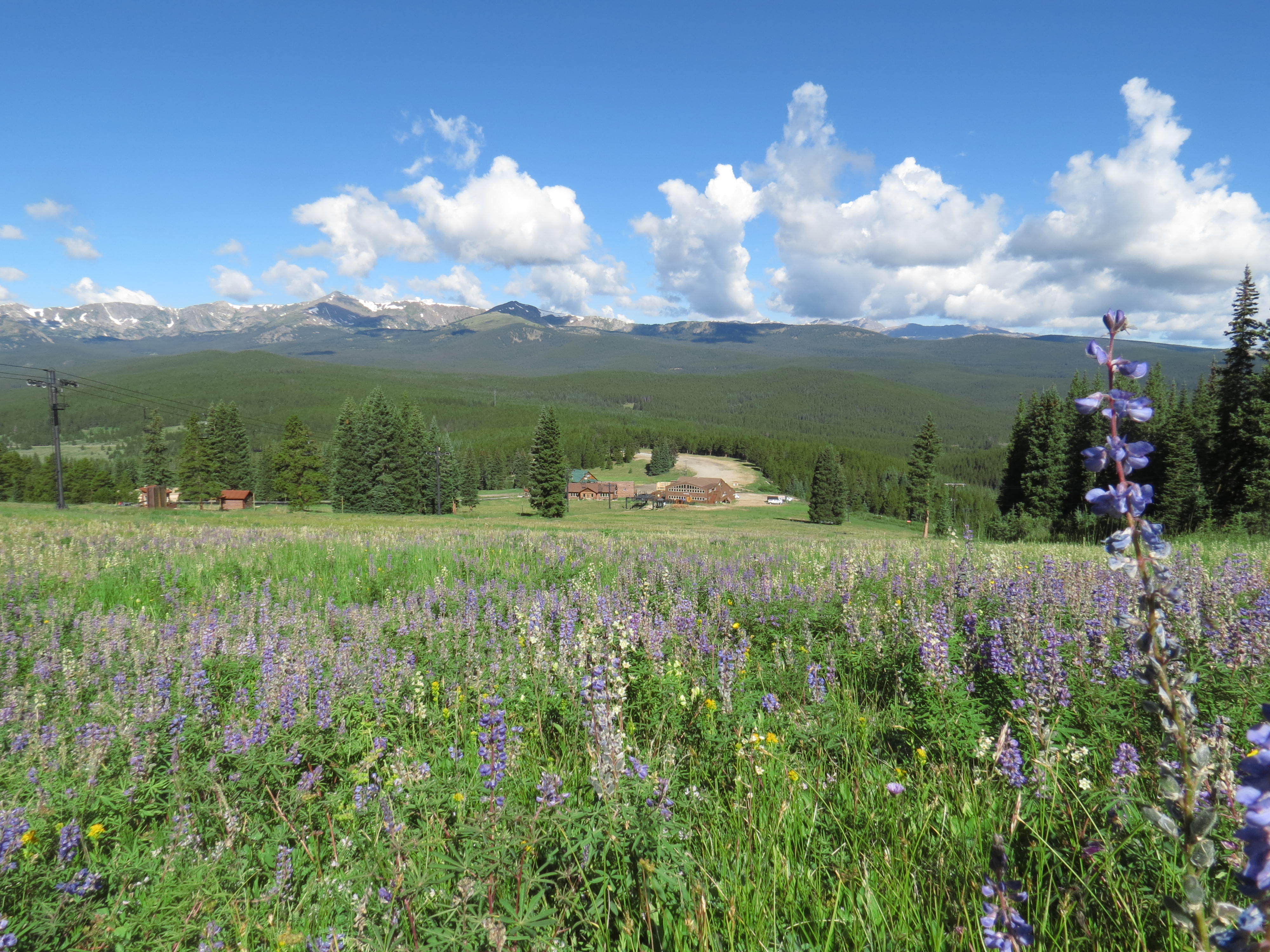 Cooper lodge with wildflowers in the foreground